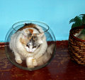 Cat in a glass sphere Royalty Free Stock Photo