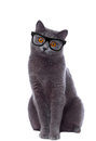 Cat with glasses looking curiously isolated on white Stock Images