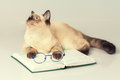 cat with glasses lying on the book Royalty Free Stock Photo