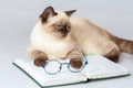 Cat with glasses, lying on the book Royalty Free Stock Photo
