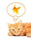 Cat and goldfish Stock Photography