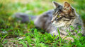 Cat in grass beautiful city s green summer garden Royalty Free Stock Image