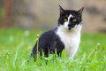 Cat in the grass black and white Royalty Free Stock Photos