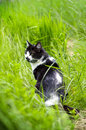 Cat in the grass black and white sitting Royalty Free Stock Photos
