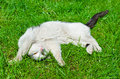 Cat on the grass cute lying Stock Image