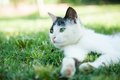 Cat on the grass cute lying green Stock Photo