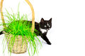 Cat and grass isolated on white background Royalty Free Stock Photo