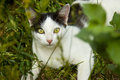 Cat in the grass photograph shows a young summer village Stock Image