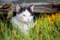Cat in grass a white observing something while hiding the Royalty Free Stock Photo
