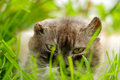 Cat in the grass with yellow eyes Royalty Free Stock Photos