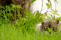 Cat in the grass with yellow eyes Stock Photo
