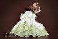 Cat in green frilling dress on brown background Royalty Free Stock Photo