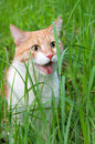 Cat in green grass Royalty Free Stock Images