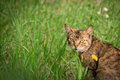 Cat in the green grass Royalty Free Stock Photo