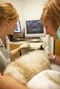 Cat having ultrasound scan at vets by veterinarians Stock Images