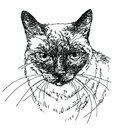 Cat head vector hand drawing illustration