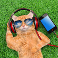 Cat headphones wearing sunglasses relaxing in the grass Stock Images