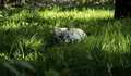 Cat hides in the grass a sits preys on birds Royalty Free Stock Photos