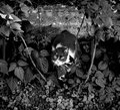 Cat Hiding In His Hideout