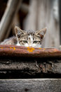 Cat is hiding Royalty Free Stock Photo