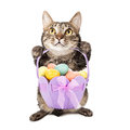 Cat holding easter basket Images libres de droits
