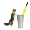 Cat holding an umbrella holder standing isolated on white square x Stock Photos