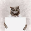 Cat holding a white banner on grey Stock Photos