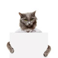 Cat holding a white banner isolated on Royalty Free Stock Photo