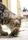 Cat hunted a bird on street Stock Photo