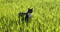 Cat hunting Stock Image