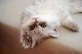 Cat i love the is william Stock Image