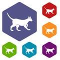 Cat icons set hexagon