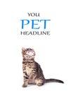 Cat isolated on white background Royalty Free Stock Photo