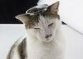 Cat king of the studio