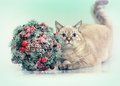 Cat with kissing bough cristmas decoration Stock Image
