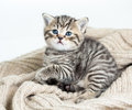 Cat kitten lying on jersey cute Stock Photos