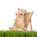 Cat kitten sitting in deck chair sunlounger isolatet on white background Stock Images