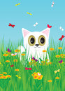 Cat kitten of white color and color butterflies against flowers and the sky Royalty Free Stock Photography