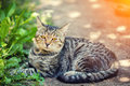 Cat lays in the yard Royalty Free Stock Photo