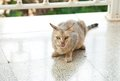 Cat lick itself domestic on the porch Royalty Free Stock Image