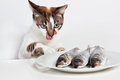 Cat licked over the fish. Royalty Free Stock Image