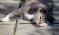 Cat lies on the floor Royalty Free Stock Photos