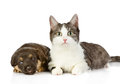 The cat lies near a dog isolated on white background Stock Image