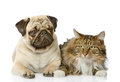 The cat lies near a dog. Royalty Free Stock Photo