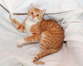 Cat lies on white background crumpled Royalty Free Stock Images
