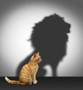 Cat with lion shadow on the wall Stock Image