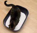 Cat litter clean box with white straw and inside Royalty Free Stock Image