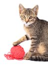 Cat little playing with wool on white background Royalty Free Stock Photos