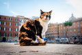 Cat lives near largo di torre argentina rome italy that have cats sanctuary nearby Stock Photography