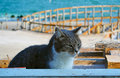 The cat living on the beach Royalty Free Stock Photo